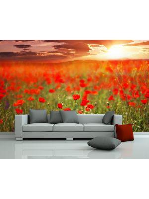 Foto behang Papaver veld