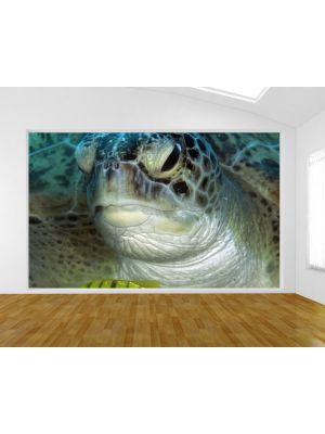 Foto behang Schildpad in de Rode zee voorbeeld