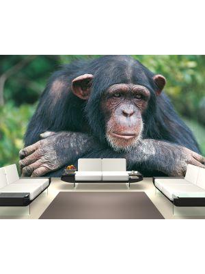Foto behang Chimpansee voorbeeld