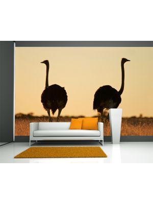 Foto behang Struisvogel- Kalahari woestijn in Zuid Afrika voorbeeld