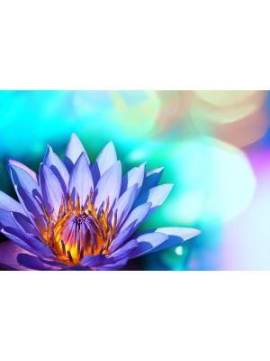 Foto behang Bonte lotus bloemen