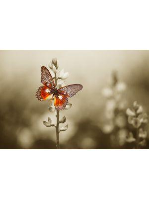 Foto behang Rode vlinder