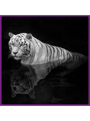 Foto print op canvas Tijger in het water