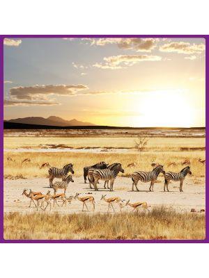 Foto print op canvas Serengeti - Gazellen en zebras