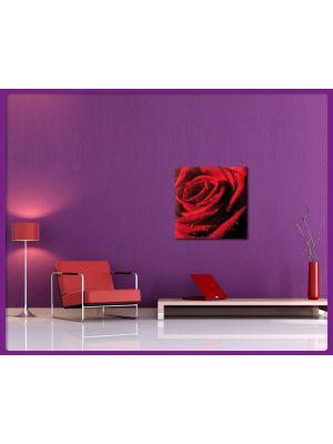 Foto print op canvas Rode roos met waterdruppels
