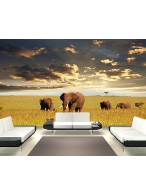 Foto behang Olifanten Kudde