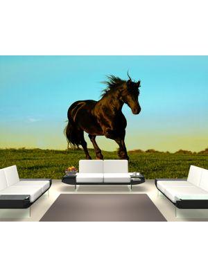 Foto behang Paard