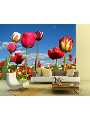 Foto behang Tulpen