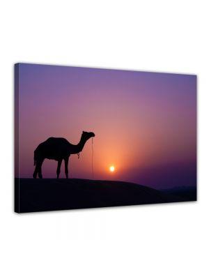 Kameel bij zonsondergang - Foto print op canvas