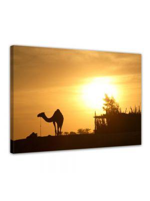 Kameel in Egypte - Foto print op canvas