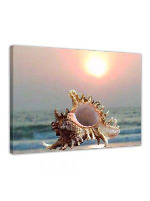 Schelp - Foto print op canvas