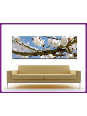 Canvas print Panorama lente bloesem