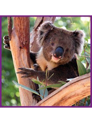 Foto print op canvas Koala beer