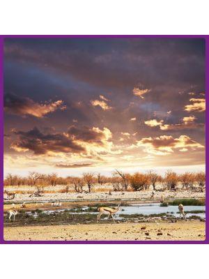Foto print op canvas Serengeti - Gazellen