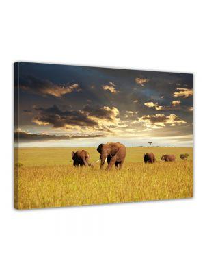 OIifanten - Foto print op canvas